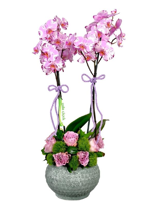 Kırçıl Orkide ve Güller