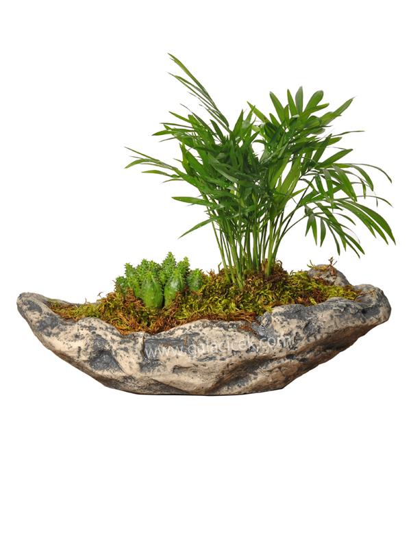 Kayataşı ve bitki