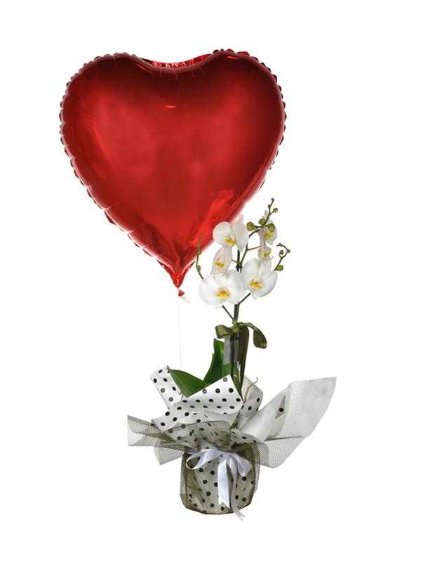 Orkide ve Kalp