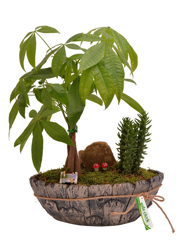 Bitki Tasarımı
