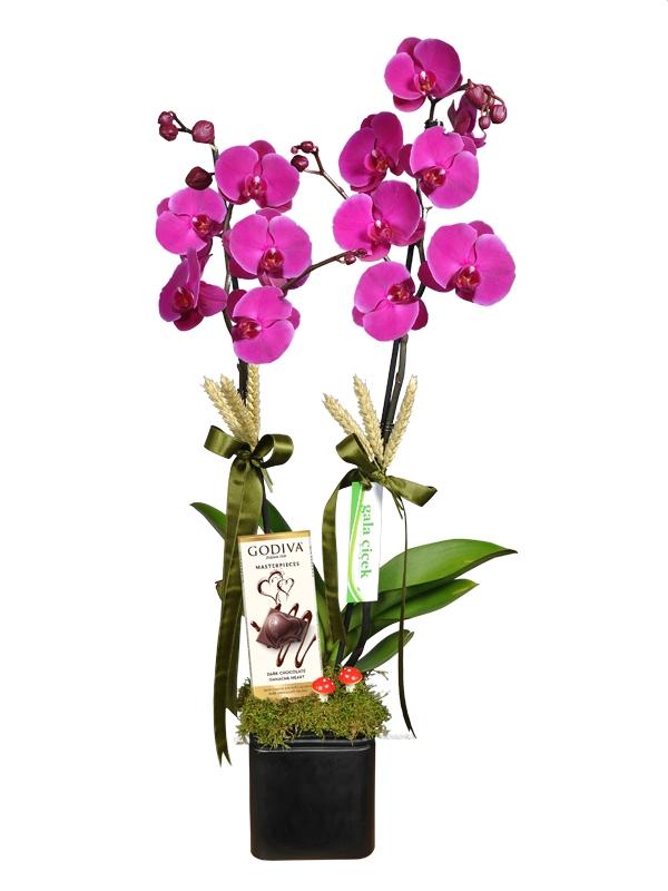 Godiva Çikolata ve Lila Orkide