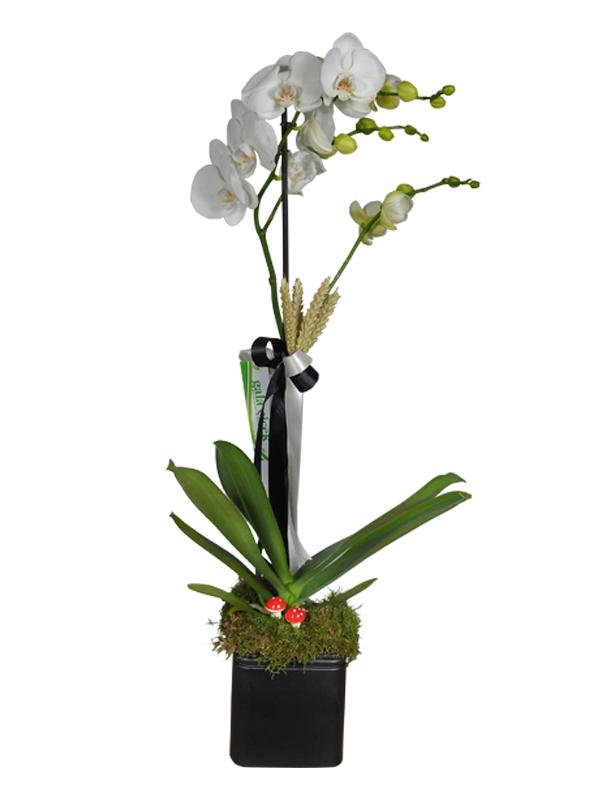 Tek Dal İthal Beyaz Orkide