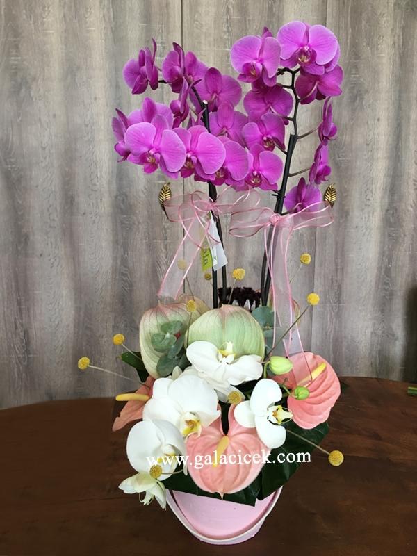 4 Dal Vip Orkide
