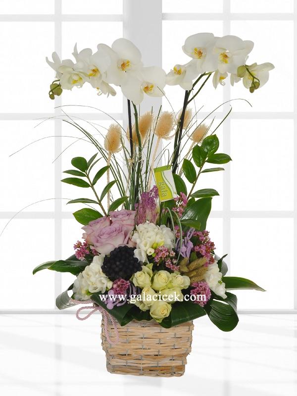 Vip Orkide ve Güller
