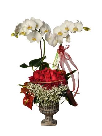 Vip Orkide