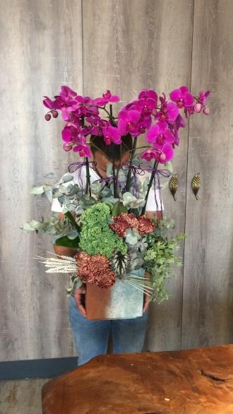 Bahçelievler Orkide Tasarım