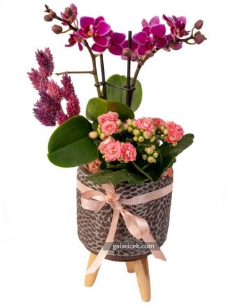 Mini Orkide Tasarım