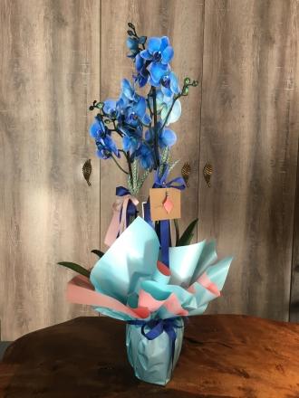 İki Dallı,Mavi Orkide