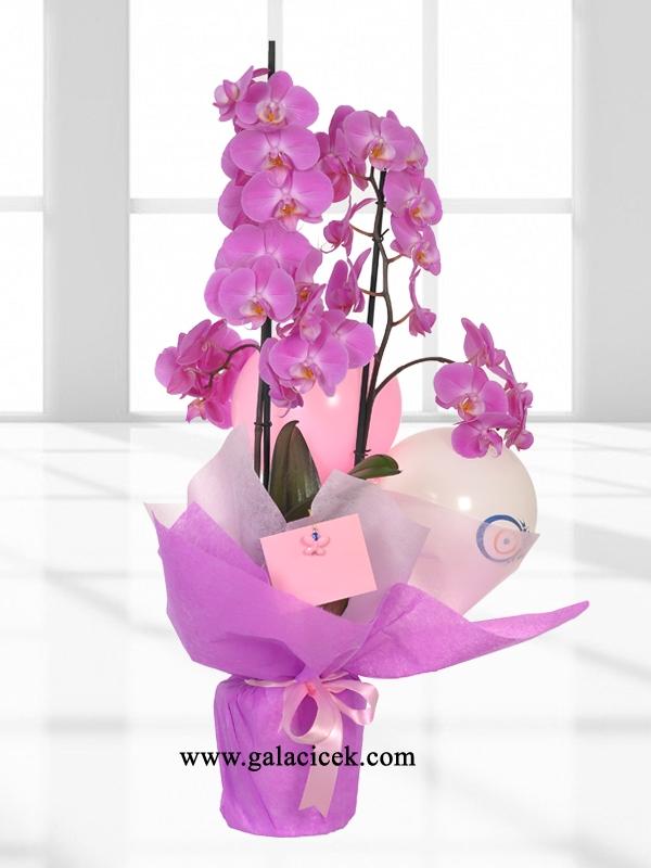 Lila Rengi Çift Dal Orkide