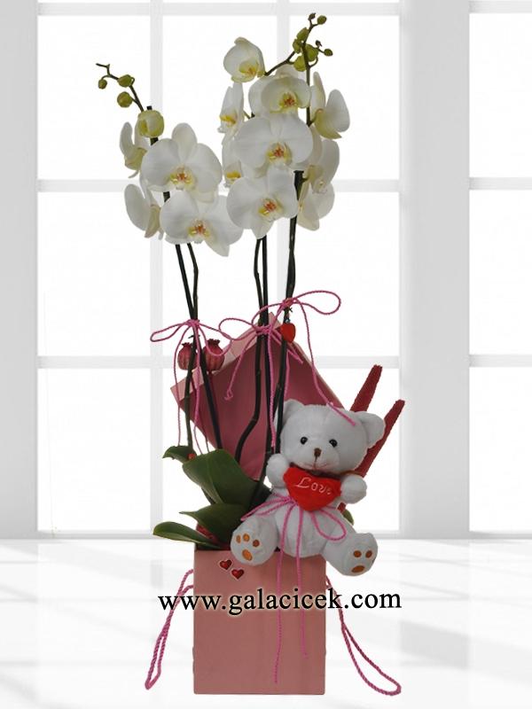 Ayıcıklı Orkide