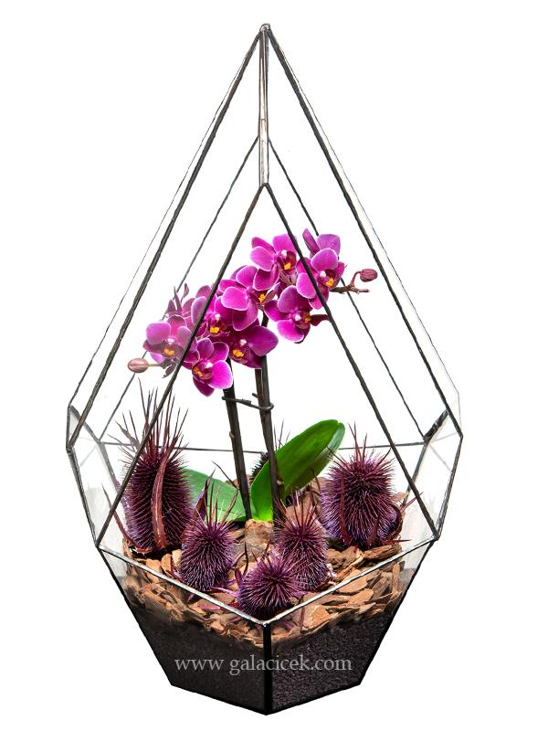 Özel Orkide