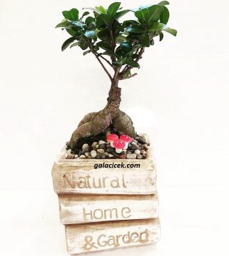 Bahçelievler Bonsai Tasarım