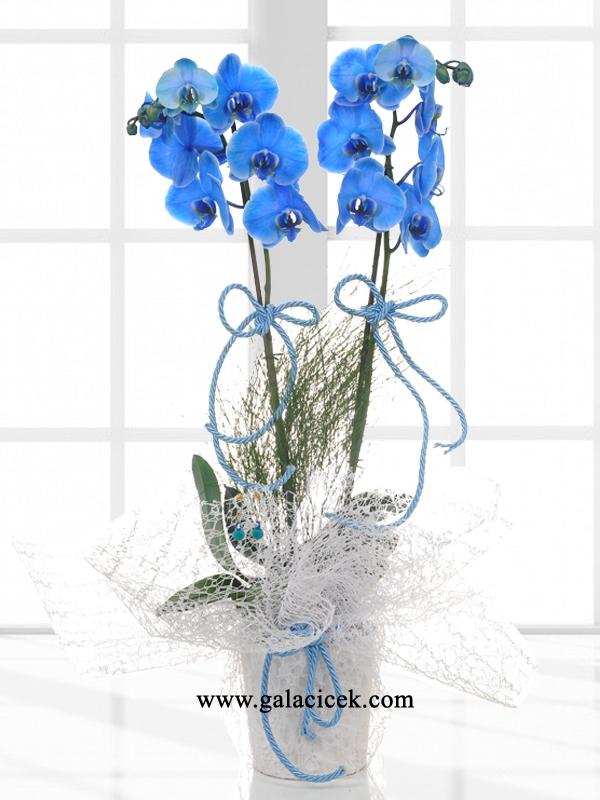 Çiftli Mavi Orkide Aranjman