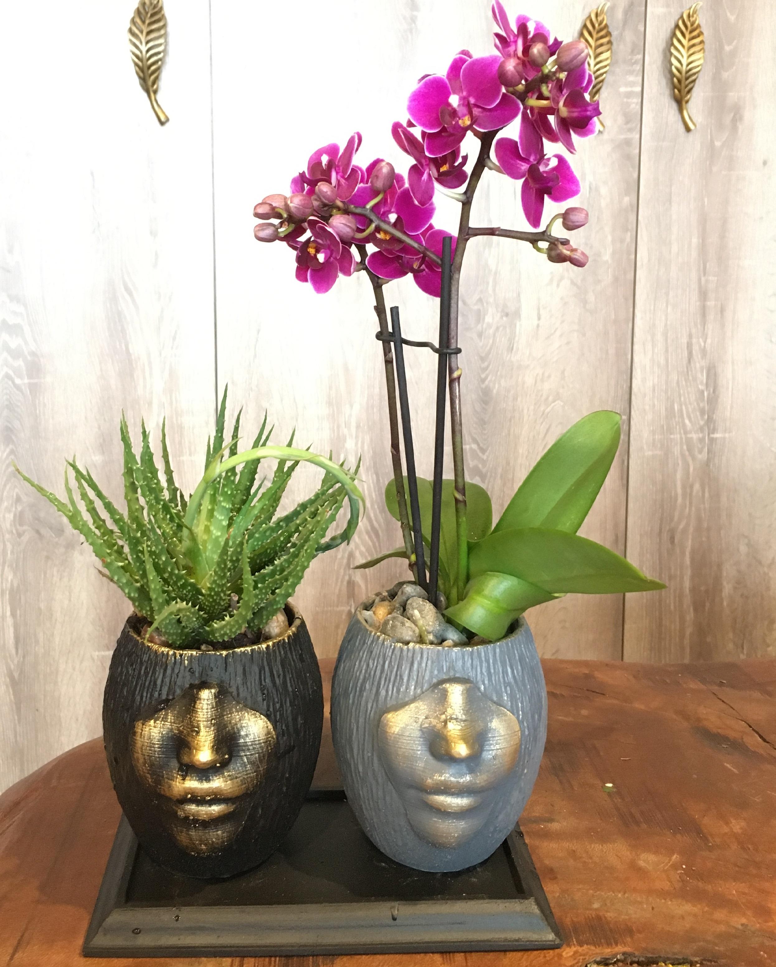 Yeşilköy Orkide Tasarım