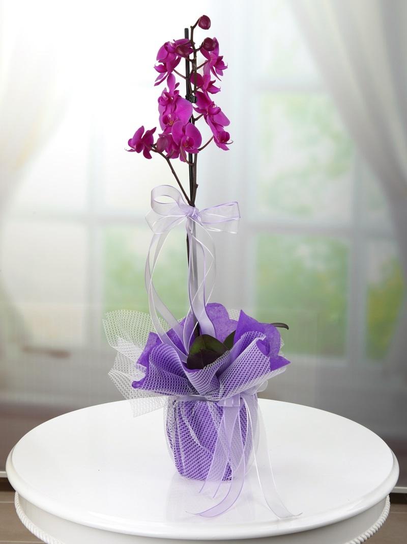 Tek Dal Mor Orkide
