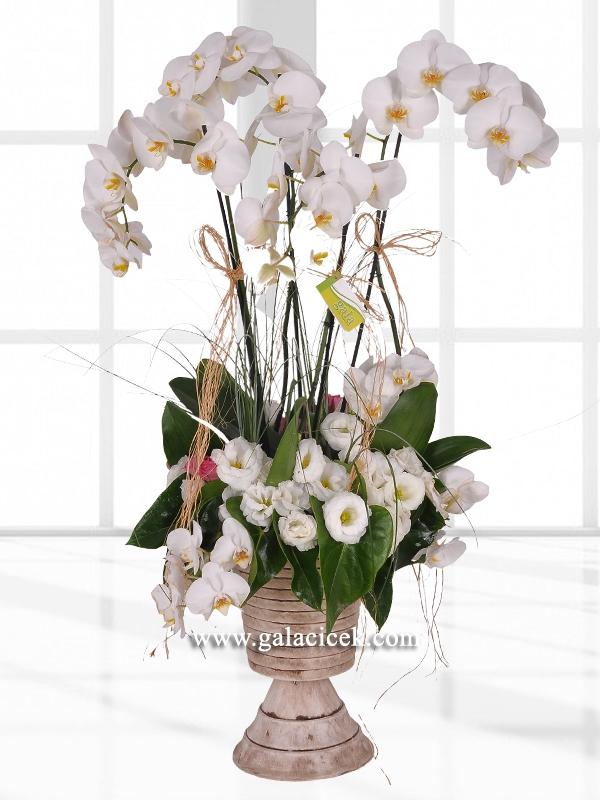 butik beyaz orkide